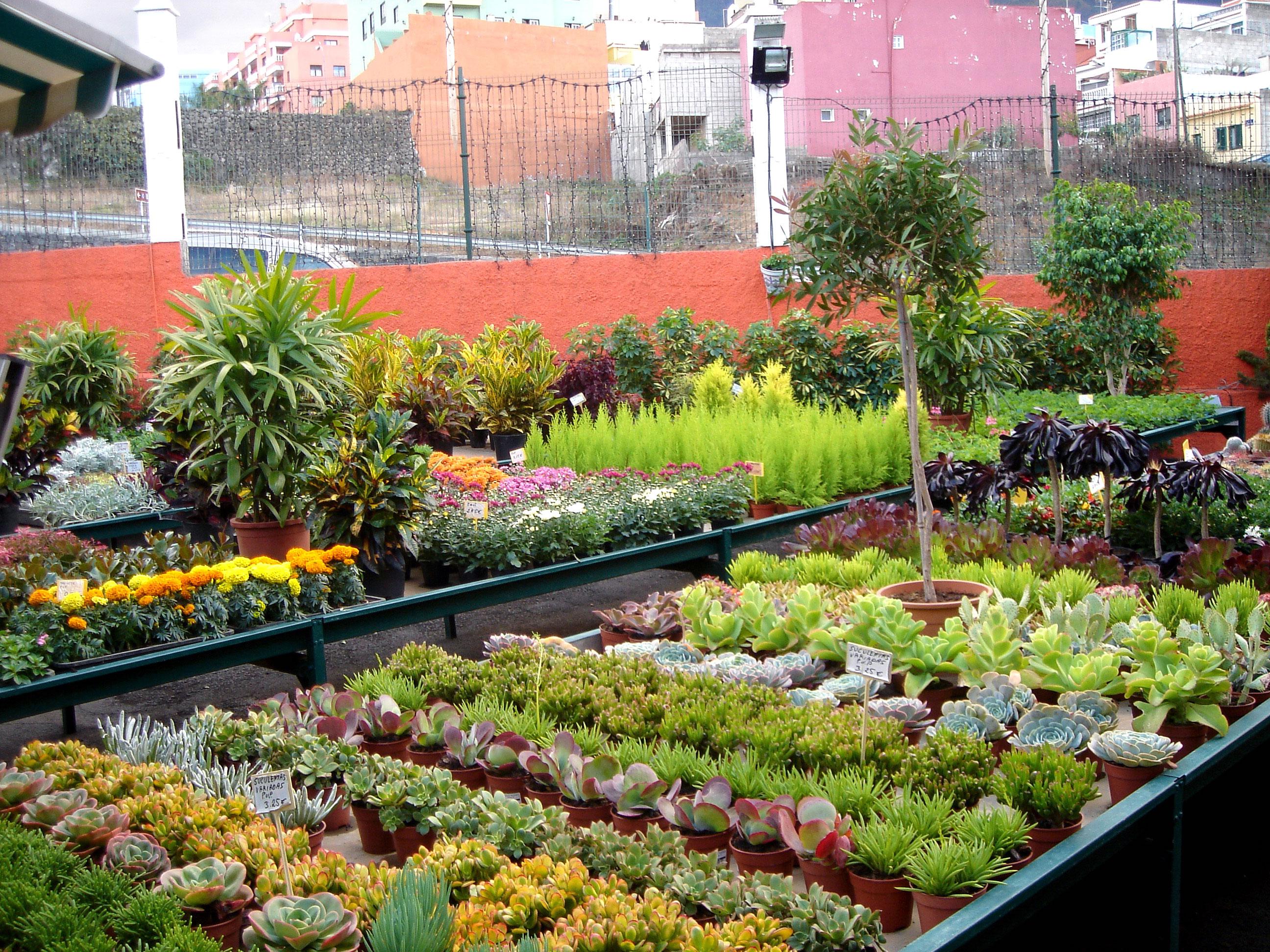 Jardiner a el castillo los realejos tenerife for Paginas de jardineria
