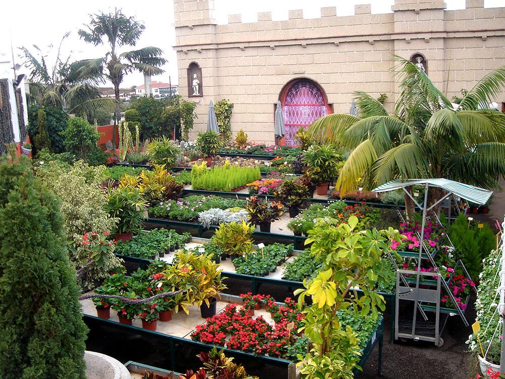 Jardiner a el castillo los realejos tenerife - Centros de jardineria madrid ...